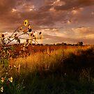 Colorado Farm Land III by Pamela Hubbard