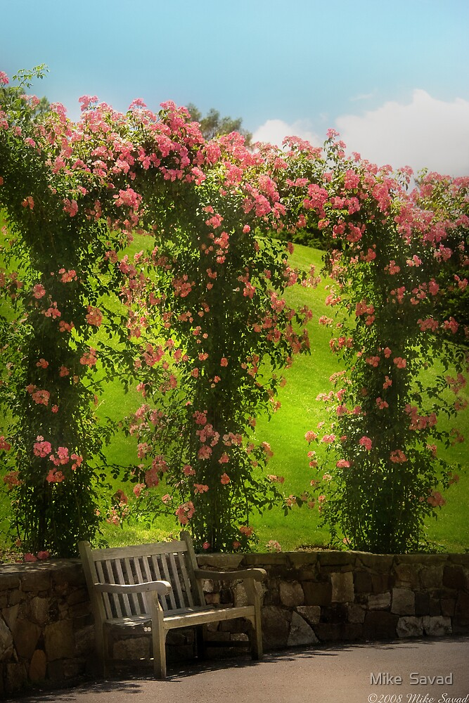 The Rose Arbor by Michael Savad
