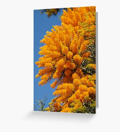 Nuytsia Bloom Greeting Card