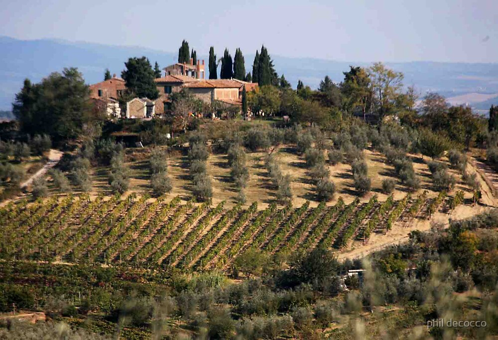 Tuscan Vineyards and Olive Orchards by phil decocco
