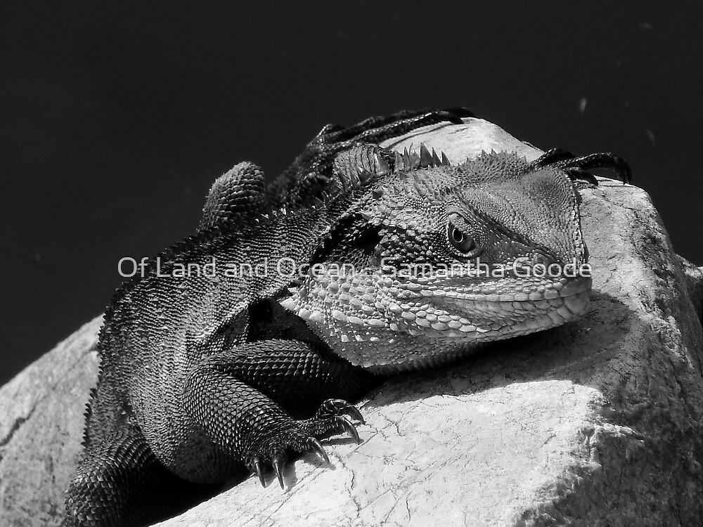 Water Dragon in Black & White by Of Land & Ocean - Samantha Goode