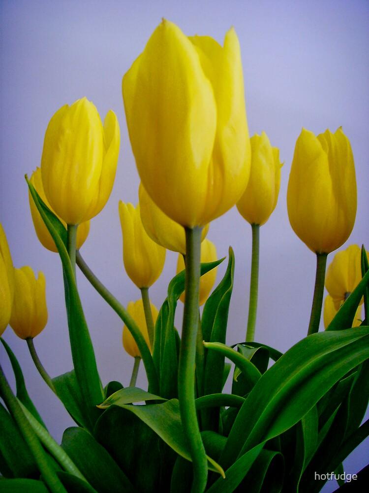 """""""Yellow Tulips"""" by hotfudge"""