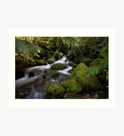 A Glimpse of Sun at the Rainforest Gallery Art Print