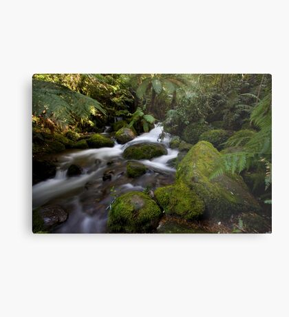 A Glimpse of Sun at the Rainforest Gallery Metal Print