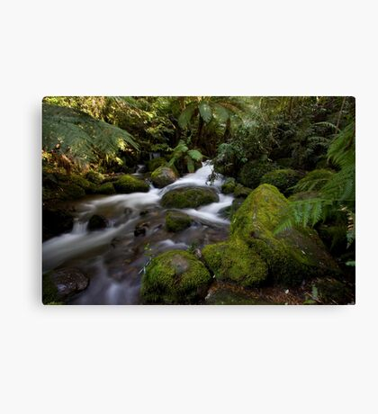 A Glimpse of Sun at the Rainforest Gallery Canvas Print
