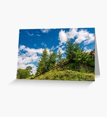spruce trees on a slope under the blue sky Greeting Card