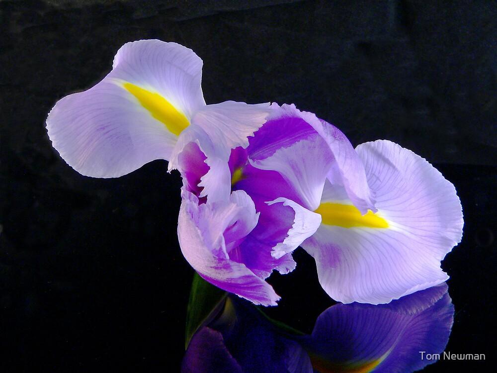 Purple Iris  by Tom Newman