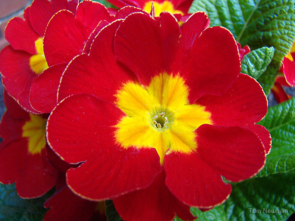 Red Bloom by Tom Newman