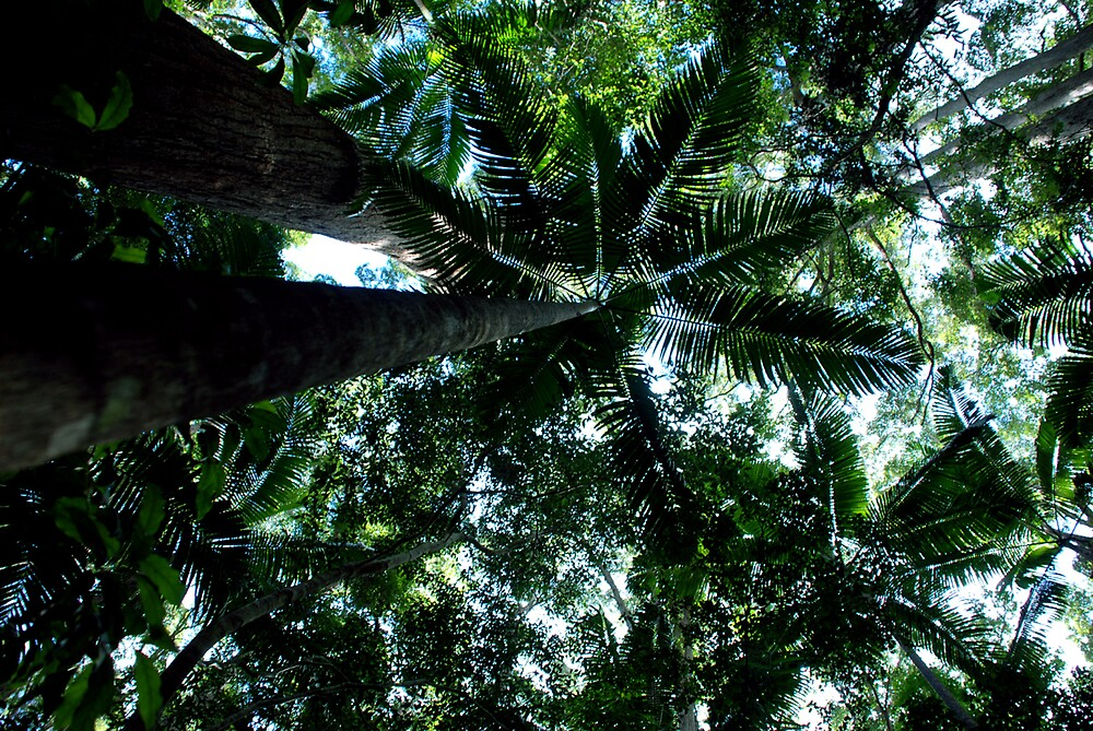 Fraser Island by pondyphotos