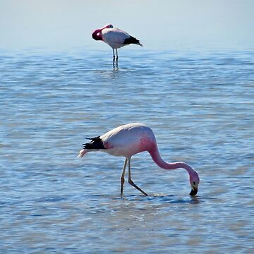 White Lagoon Flamingo by Thecove