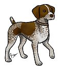 German Shorthaired Pointer by Jennifer Stolzer
