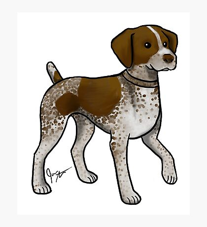 German Shorthaired Pointer Photographic Print