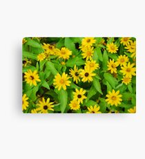 Flower Patch Canvas Print