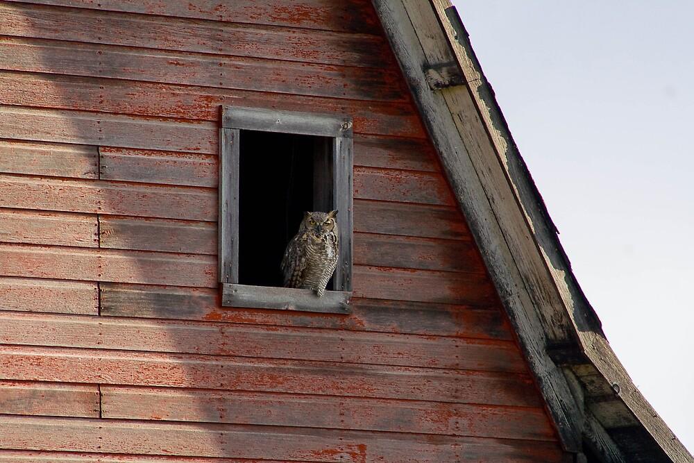 Barn Owl by DakotaDawn