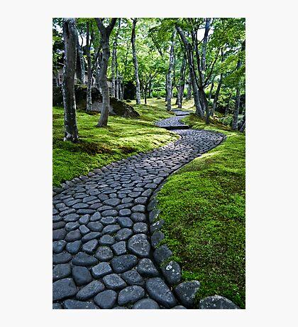 Path Through Moss Photographic Print