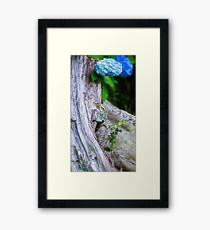 Hydrangea and Tree Trunk Framed Print