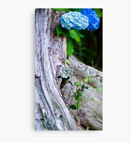 Hydrangea and Tree Trunk Canvas Print