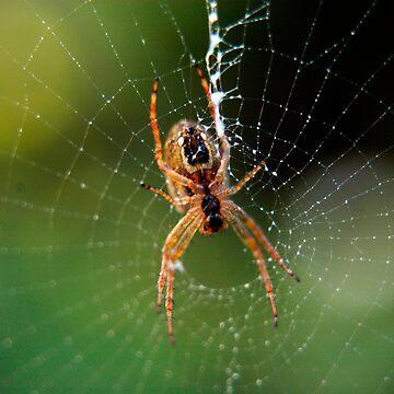 Garden Spider by monzastar