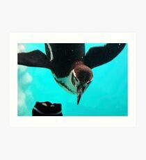 Humboldts Penguin Art Print