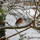 Robin Redbreast by Tony Reed