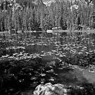 Hallett Peak from Nymph Lake by Gary Lengyel