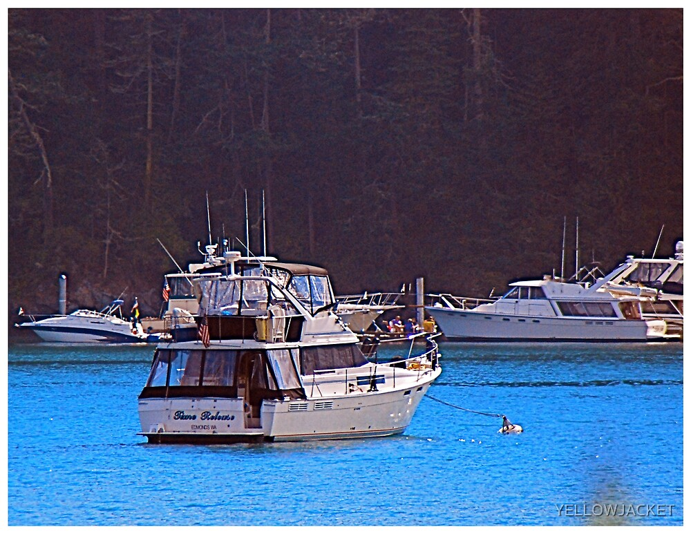 SAFE HARBOR FOR THE NIGHT by YELLOWJACKET