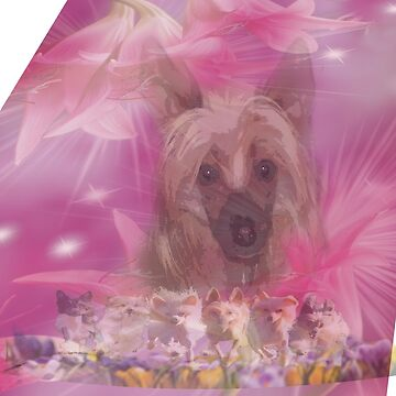 Chinese Crested Dogs, pink lily, lilies by Batiste