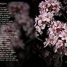 Night Blossoms (poster) by Anne van Alkemade