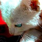 Kitty by jpryce