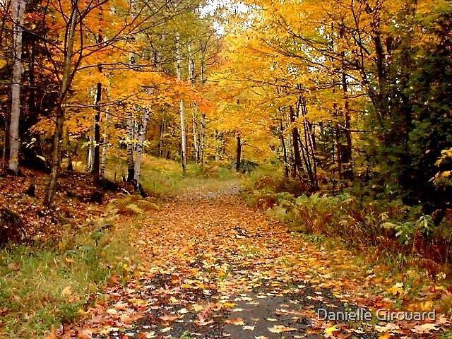 Fall in Québec by Danielle Girouard