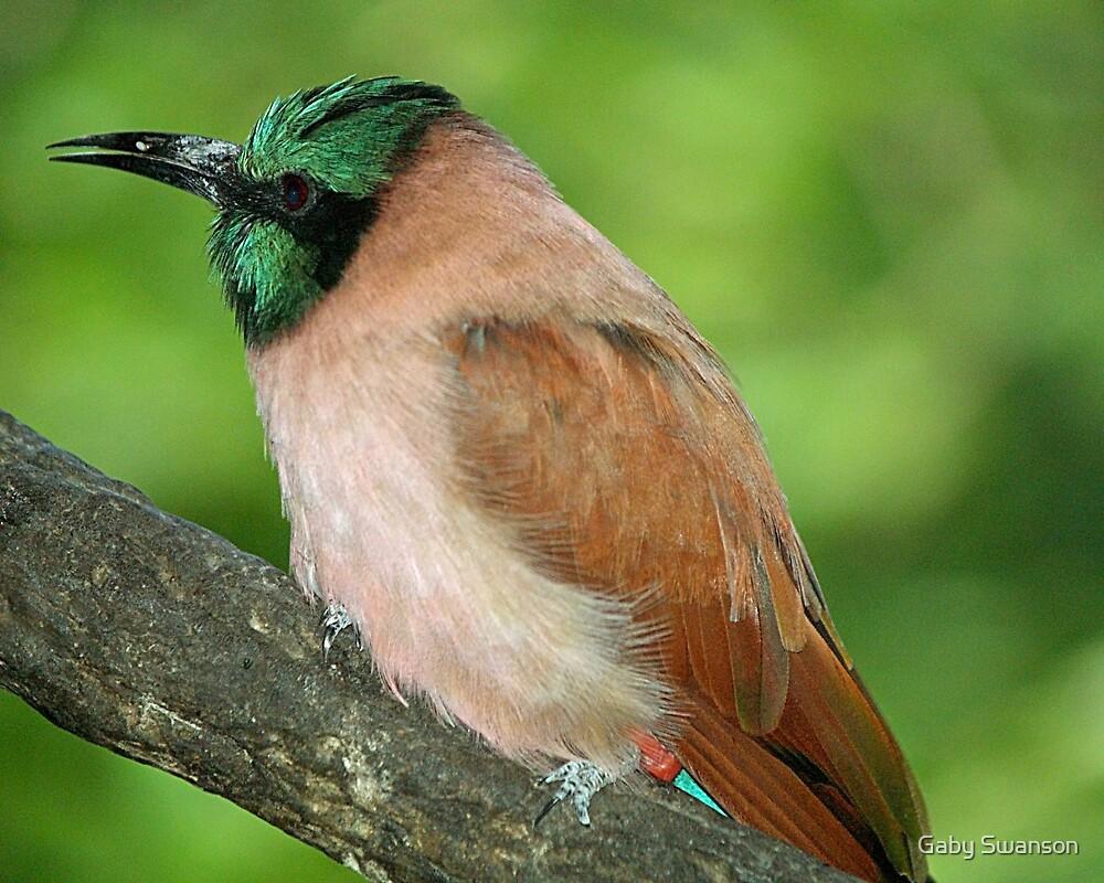 Kingfisher by Gabriele Swanson