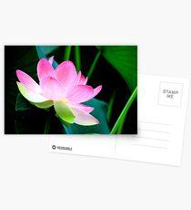 The Last Lotus Postcards