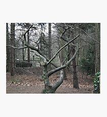 Tree nouveau Photographic Print