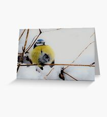 Cold winter bird Greeting Card