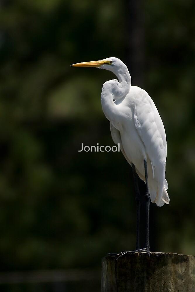 Standing Tall Egret by Jonicool