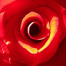 Sunlight and Shadows on a Red Rose by Honor Kyne
