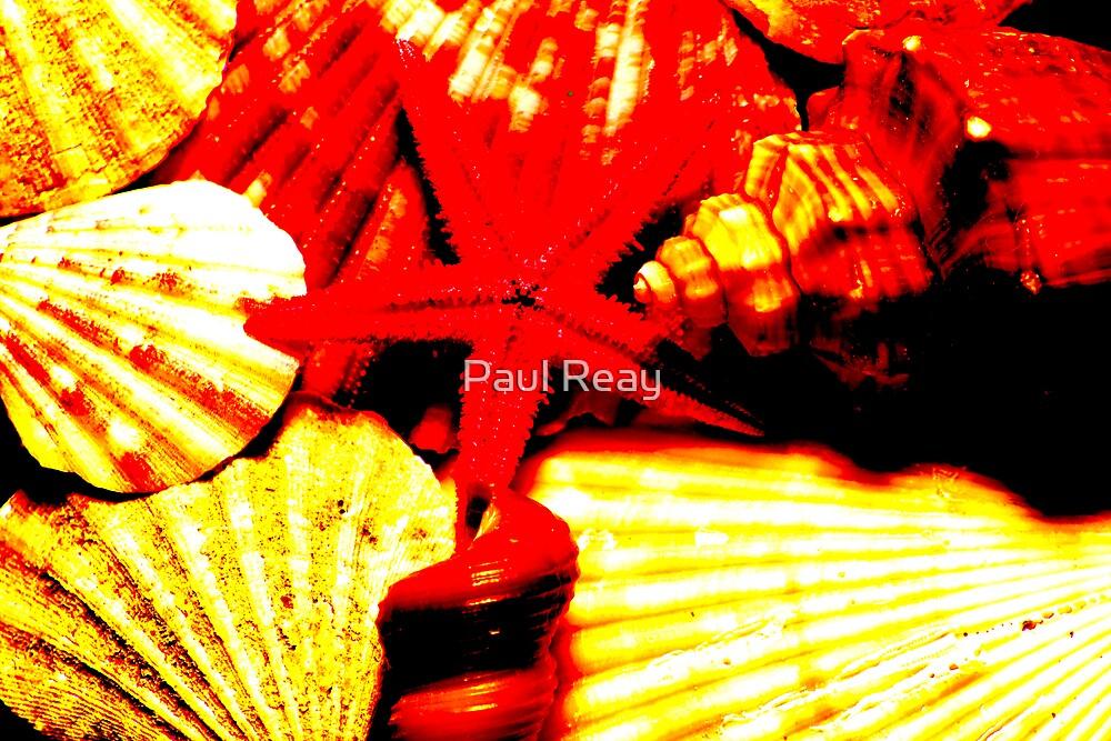 Shells by Paul Reay