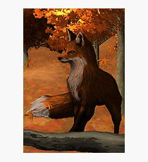 Sly Fox on Alert Photographic Print