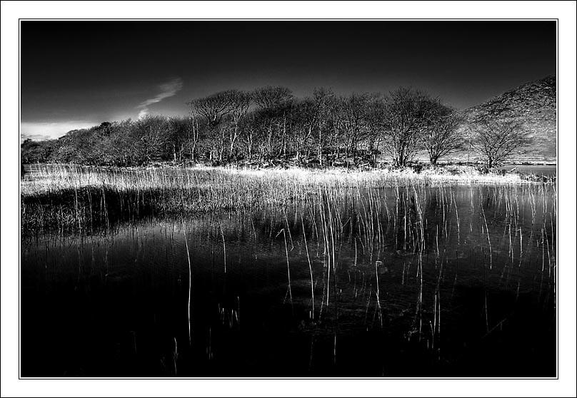 Connemara Trees by alanoluain