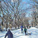 Central Park in Snow, December by lenspiro