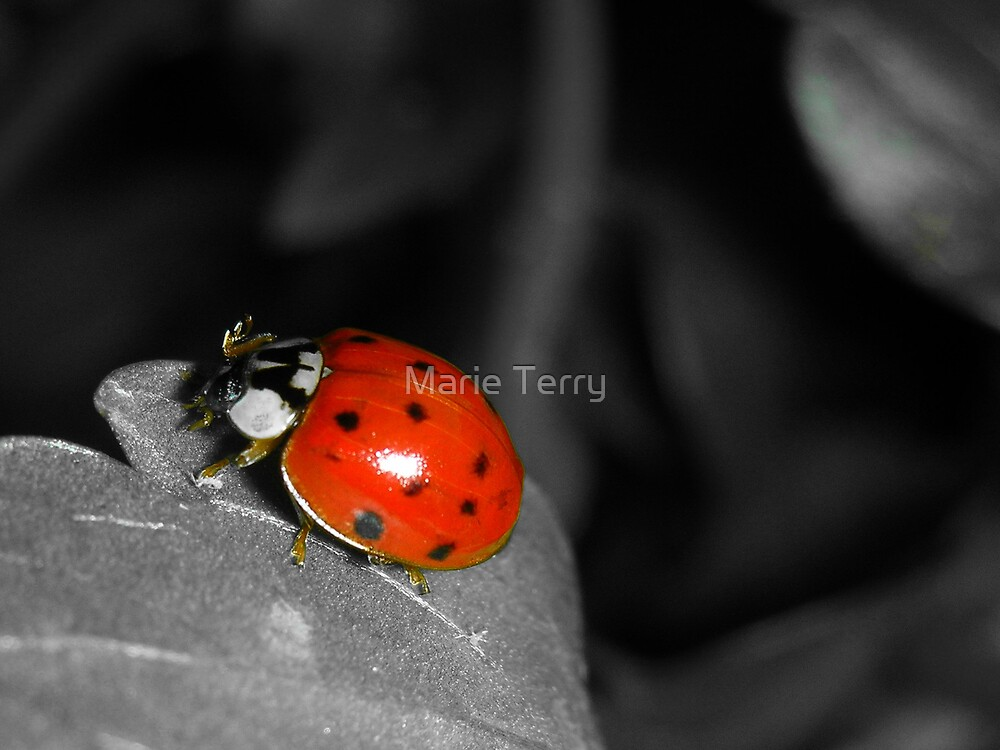 Ladybug by Marie Terry