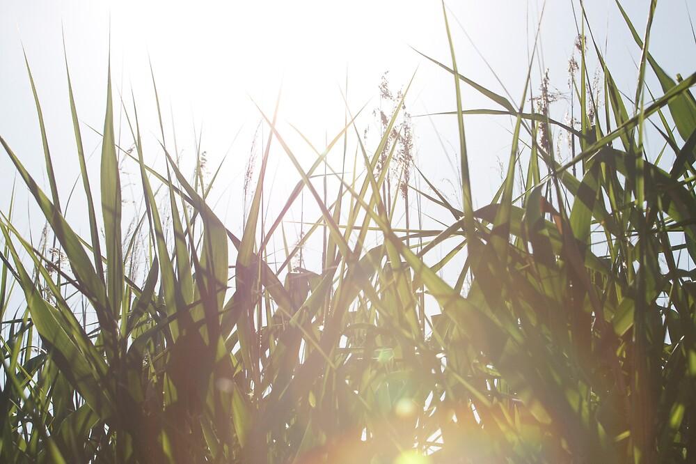 Sun Through Reeds by James Troi