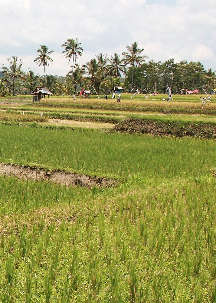 Fields, Ubud.  by Michael Stocks