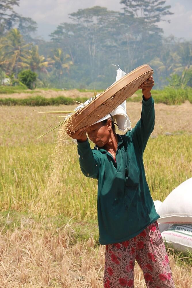 Harvest, Ubud. by Michael Stocks