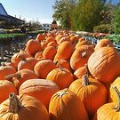 Pumpkin season at Russo's by Owed To Nature