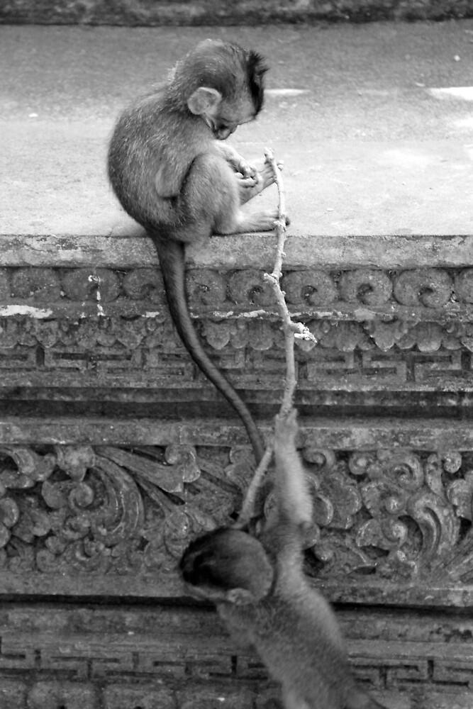 Monkey Business, Ubud.  by Michael Stocks