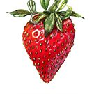 Strawberry by DarwinsAtelier