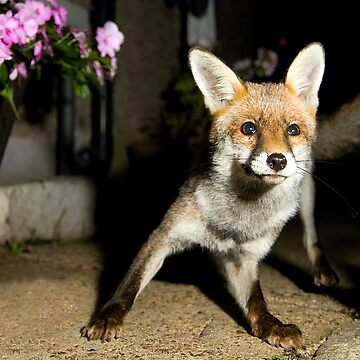 Paparazzi Snap Fox!  by ShootnHooton