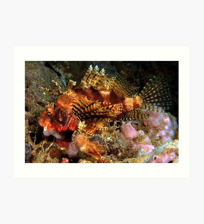 Dwarf Lionfish Art Print