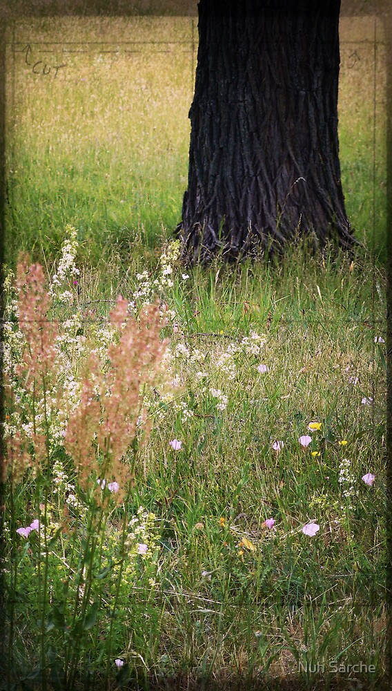 Meadow composition... by Nuh Sarche